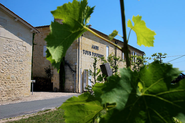 Peeking through the vines with Château Ambe Tour Pourret across the road