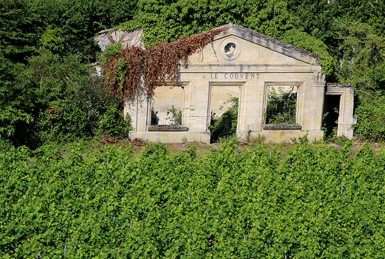 The crumbling ruins of the Ursuline's Convent surrounded by grape vines in Saint-Émilion