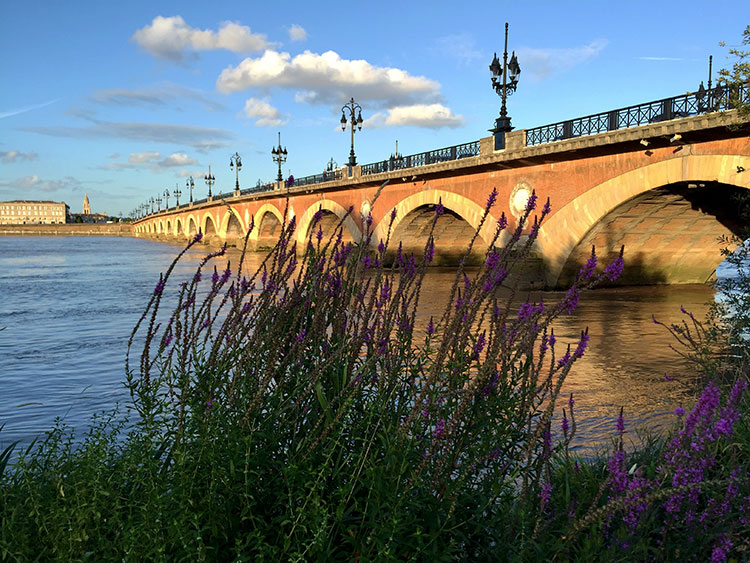Lavender grows along the quay with the arches of the Pont du Pierre in the background