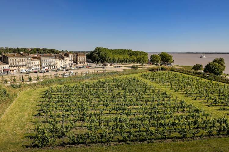 The Clos de l'Echauguette vineyard overlooking the Gironde Estuary inside the Citadelle de Blaye